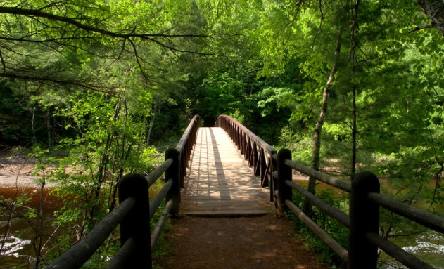 A photo of a bridge in a forest.